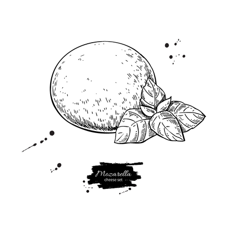 Mozzarella cheese vector drawing. Hand drawn round piece with ba