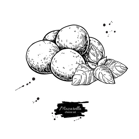 Mozzarella cheese vector drawing. Hand drawn baby mozzarella