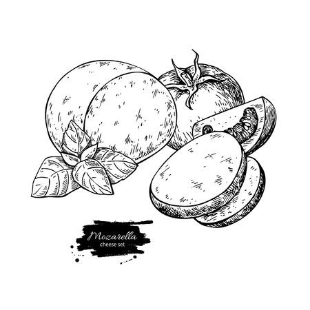 Mozzarella cheese vector drawing.