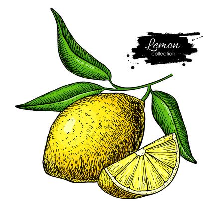 Dibujo de limon Foto de archivo - 94264840