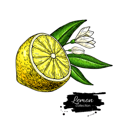 Dibujo de limon Foto de archivo - 94264846