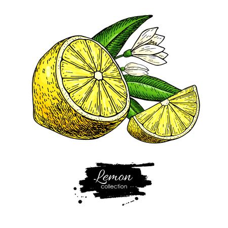 Desenho vetorial de limão. Ilustração artística de frutas de verão. Foto de archivo - 94281350