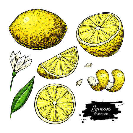 Lemon vector drawing. Summer fruit artistic  illustration. Isolated hand drawn slice, blooming flower, leaves. Vegetarian tropical food. Great for label, poster, print, packaging