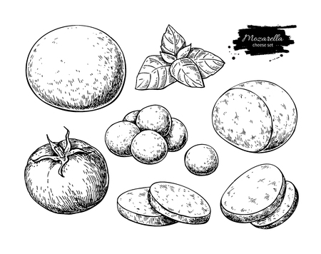 Mozzarella cheese vector drawing. Hand drawn round piece, baby mozzarella, basil and tomato. Ilustração