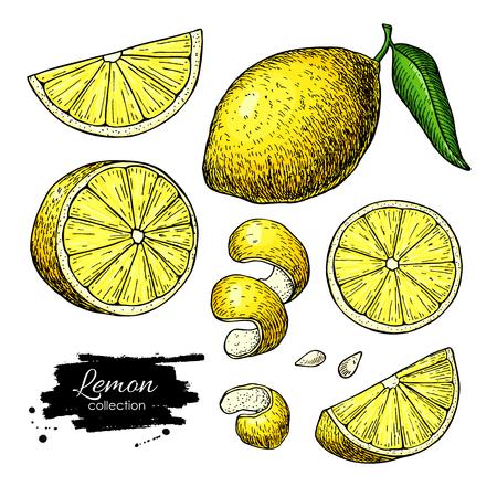 レモンベクトル描画。夏のフルーツアーティスティックイラスト。