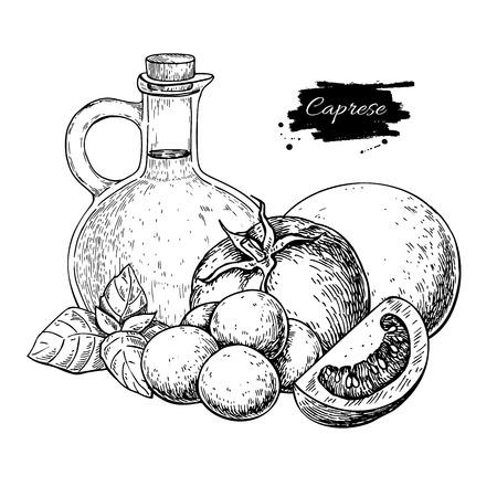 Ingredientes da salada Caprese. Desenho vetorial. Esboço de comida tradicional italiana. Azeite gravado, mozarella, tomate e folhas de manjericão. Ótimo para o menu do restaurante, rótulo, banner, brochura.