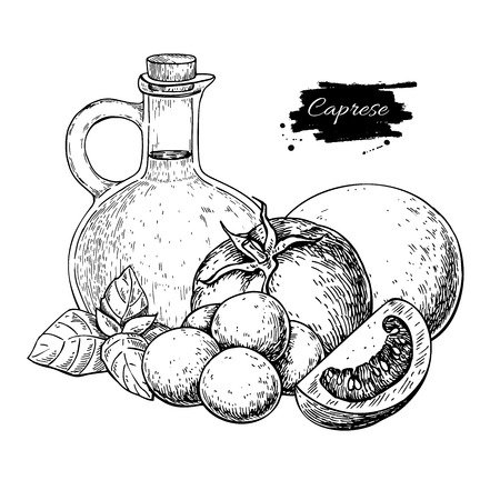Caprese salad ingredients. Vector drawing. Italian traditional food sketch. Engraved olive oil, mozarella, tomato and basil leaf. Great for restaurant menu, label, banner, brochure.