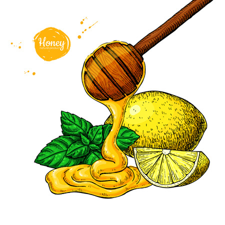Honey with lemon and mint vector drawing. Wooden spoon, honey dr