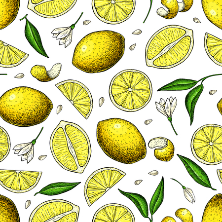Lemon vector seamless pattern drawing. Summer citrus fruit print.  Isolated hand drawn whole lemon slice, flower and leaf.   Vegetarian tropical food. Great for wallpaper, fabric, packaging Illustration