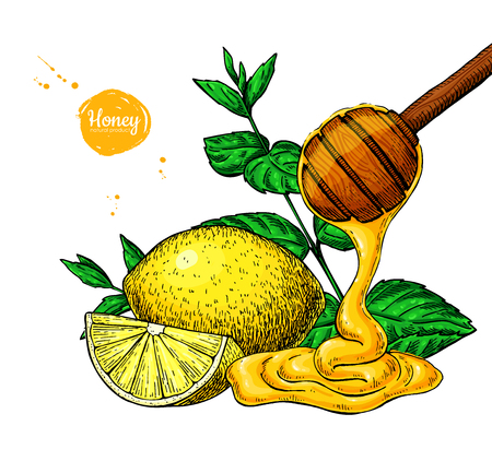 Honey with lemon and mint vector drawing, wooden spoon. Illustration