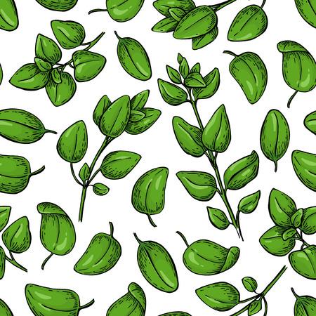 Oregano vector seamless pattern. Isolated Herb plant branch. Иллюстрация