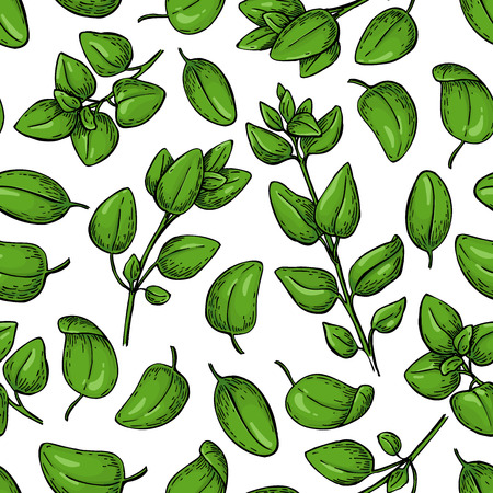 Oregano vector seamless pattern. Isolated Herb plant branch. Illustration