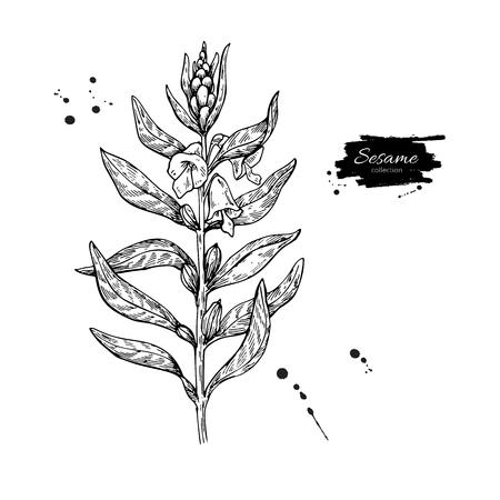 Vektorzeichnung der indischen Sesampflanze. Handgezeichnete Lebensmittelzutat. Botanische Illustration.