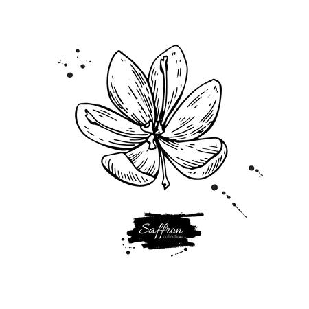 サフランの花ベクトル描画。手描きハーブと食品スパイス。