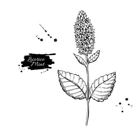 甘草ミントベクトル描画。手描きハーブスケッチ。