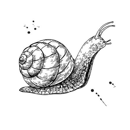 Snail vector drawing. Hand drawn isolated sketch.  Vector illustration. Reklamní fotografie - 95860069