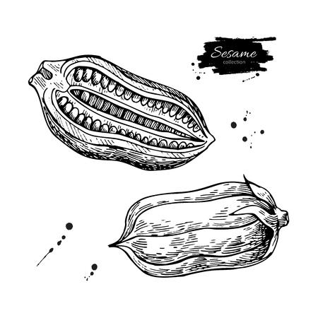 セサミナットとシードベクター描画。手描きの食材。ハーブの植物スケッチ。農業穀物彫刻物。料理の調味料。包装デザイン、ラベル、アイコン、  イラスト・ベクター素材