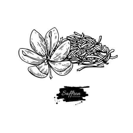 Saffron flower and dried heap vector drawing. Hand drawn herb and food spice. Engraved vintage flavor. Crocus botanical sketch. Great for packaging design, label, icon.