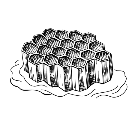 Honeycomb vector drawing. Hand drawn honey illustration.