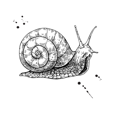 Snail vector drawing. Hand drawn isolated sketch. Engraved animal for label, mucin and snail essence cosmetic cream. Packaging design element. Concept illustration. Vettoriali