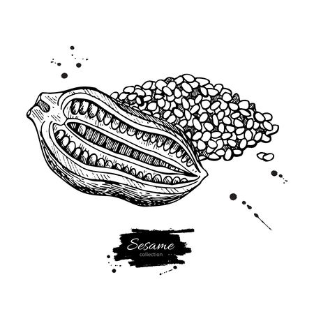 Sesame nut and seed vector drawing. Hand drawn food ingredient.