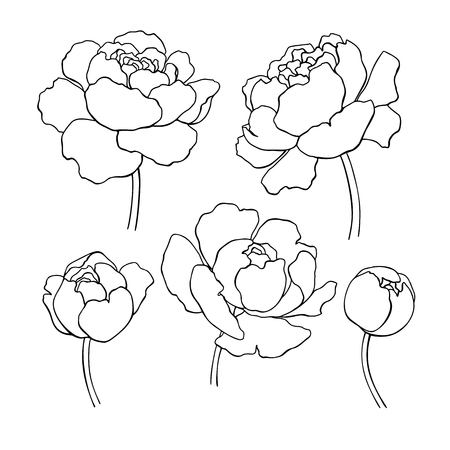 Peony line drawing. Vector hand drawn outline flower set.