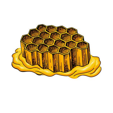 Artistic propolis honeycomb organic food sketch hand drawn vector illustration. 일러스트