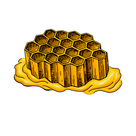 Artistic propolis honeycomb organic food sketch hand drawn vector illustration. Ilustração