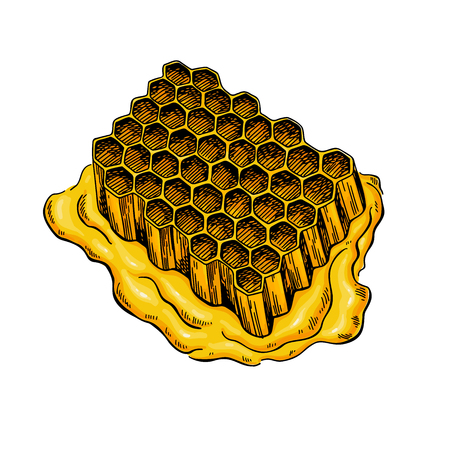 Honeycomb vector drawing hand drawn honey illustration.