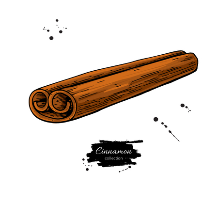 Cinnamon stick vector drawing. Hand drawn sketch.