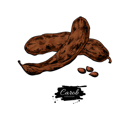 Carob vector drawing isolated hand drawn illustration.