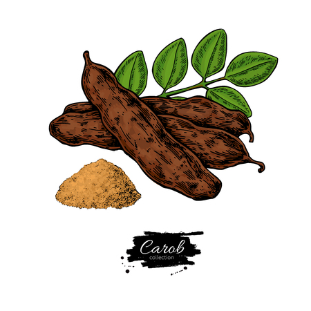 Carob vector superfood drawing. Isolated hand drawn  illustratio