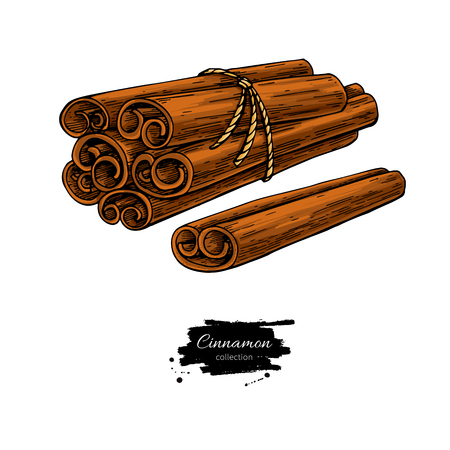 Cinnamon stick tied bunch Vector drawing.