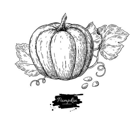 Pumpkin vector drawing set. Isolated hand drawn object with sliced piece and leaves. Vegetable engraved style illustration. Detailed vegetarian food sketch. Farm market product.
