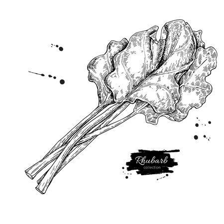 Rhabarber-Vektor-Zeichen-Set. Lokalisiertes Hand gezeichnetes geschnittenes Stück Vektorgrafik