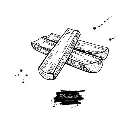 Rhabarber-Vektor-Zeichen-Set. Getrennte Hand gezeichnete geschnittene Stücke. Gemüse graviert Stil Illustration. Ausführliche Skizze des vegetarischen Lebensmittels. Bauernhofmarktprodukt. Vektorgrafik