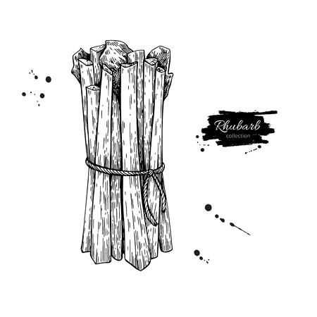 Rhabarber Haufen Vektor Zeichnung. Isolierte Hand gezeichnete Objekt. Vegeta