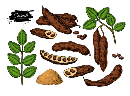 Carob vector super food drawing set. Isolated hand drawn