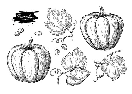 Pumpkin vector drawing set. Isolated hand drawn object with slice Ilustração