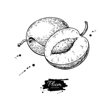 プラムベクトル描画。手描きの果物とスライスされた部分。夏の食べ物は、スタイルのイラストを刻んだ。  イラスト・ベクター素材