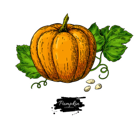 Pumpkin vector drawing set. Isolated hand drawn object with sliced piece and leaves.