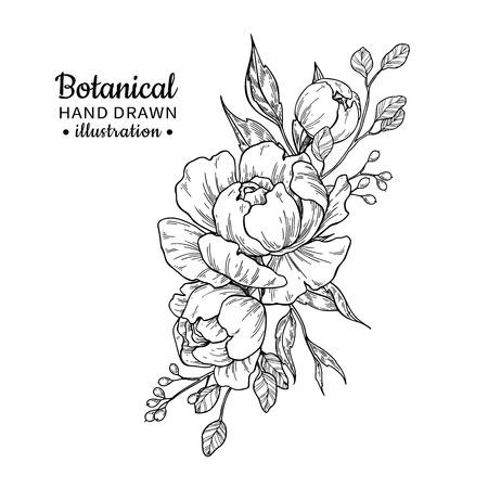 Vintage bloemboeket. Vector tekening. Pioen, roos, bladeren en bessen schets. Gegraveerde botanische samenstelling. Hand getekend bloemen bruiloft uitnodiging, labelsjabloon, verjaardagskaart. Stockfoto - 99035591