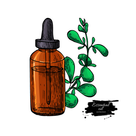 Marjoram essential oil bottle and marjoram leaves hand drawn vec