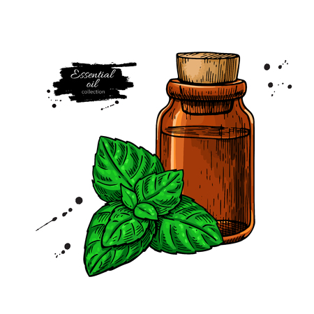 Mint essential oil bottle and peppermint leaves hand drawn Vector illustration. Illustration