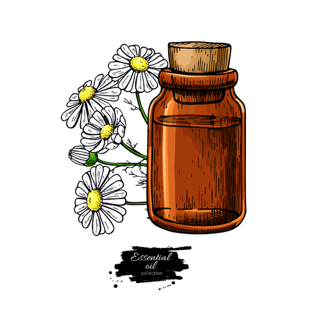 Chamomile essential oil bottle and bunch of flowers hand drawn v Illustration