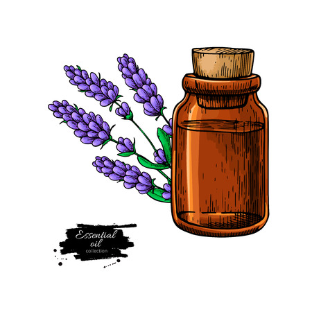 Lavander essential oil bottle and bunch of flowers hand drawn ve