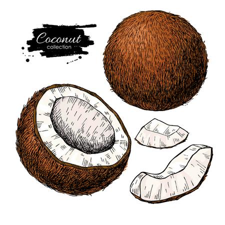 ベクトルハンド描きココナッツセット。トロピカルサマーフルーツイラスト