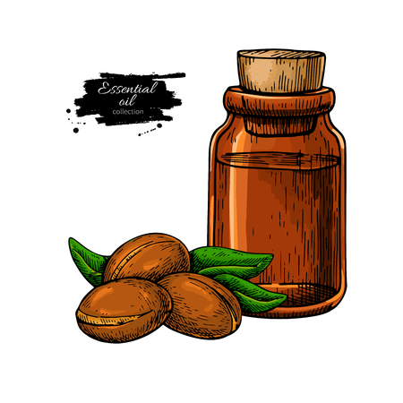 Argan essential oil bottle hand drawn vector illustration. Isola Illustration