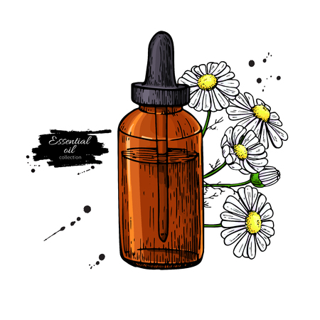 Chamomile essential oil bottle and bunch of flowers hand drawn vector illustration. Isolated drawing for Aromatherapy treatment, alternative medicine, beauty, cosmetic ingredient. Great for label, packaging design.