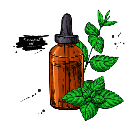 Mint essential oil bottle and peppermint leaves hand drawn vector illustration. Isolated plant drawing for Aromatherapy treatment, alternative medicine, beauty and spa, cosmetic ingredient. Great for label, packaging design.